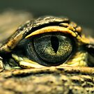 Eye of the Gator by Dennis Stewart