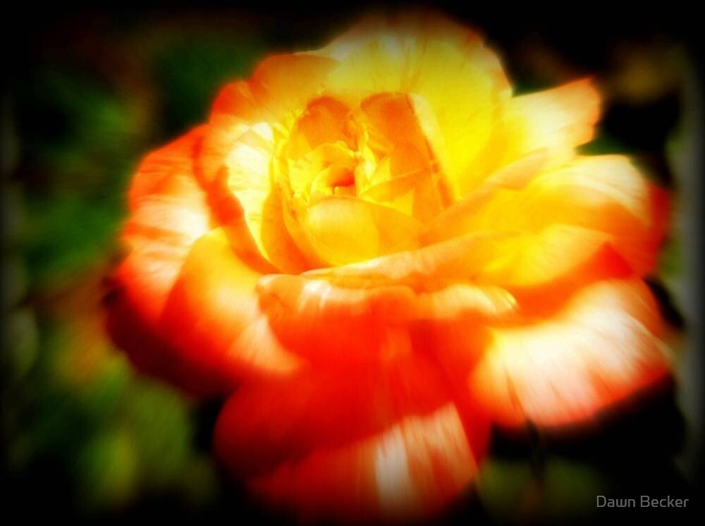 The Last Rose Stands Alone ©  by Dawn M. Becker