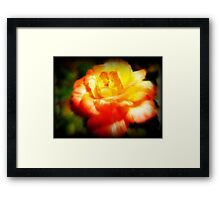 The Last Rose Stands Alone ©  Framed Print