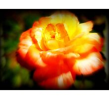 The Last Rose Stands Alone ©  Photographic Print