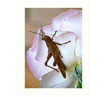 Cricket Rose Art Print