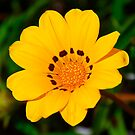 Yellow flower by Penny Smith