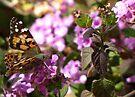 Butterfly ~ Painted Lady II by Kimberly Chadwick