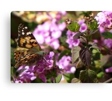 Butterfly ~ Painted Lady II Canvas Print