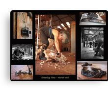 Shearing Time Canvas Print