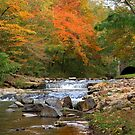 Autumn at Gulpha Gorge by Lisa G. Putman