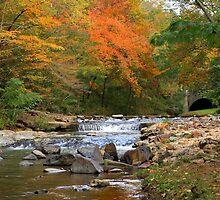 Autumn at Gulpha Gorge by Lisa G. Putman