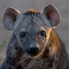 Hyena Cub by Michael  Moss