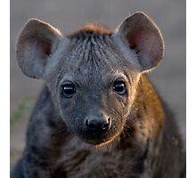 Hyena Cub Photographic Print