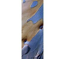 Blue and cream Bark Photographic Print
