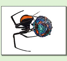 nasty redback by kevin chippindall