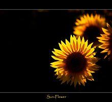 Sun-Flower by Enrico Martinuzzi
