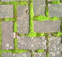 Moss is growing on my path by photosbyDavid