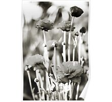 pete's poppies Poster