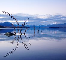 """lilac""   lake tekapo, south island, nz by rina  thompson"