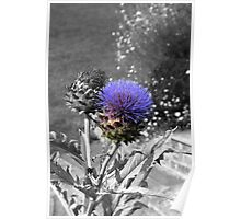 Purple Thistle Poster