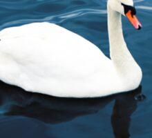 White swan on blue lake Sticker