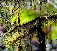 """Tree Fluff"" by Husky"