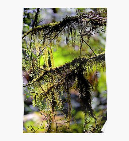 """Tree Fluff"" Poster"
