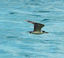 Gull in Flight by warmonger62