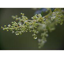 Rain drops on tiny flowers. Photographic Print