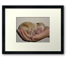 """quiet""........baby sleeping! Framed Print"