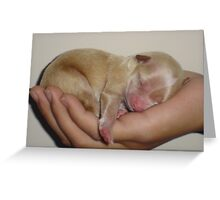 """quiet""........baby sleeping! Greeting Card"
