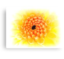 Yellow Dhalia Canvas Print