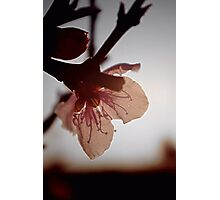 Blossoming light Photographic Print