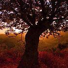 Autumn Calls Me  by Hanna Semaan