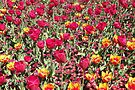 A Riot of Colour ! by Trish Meyer