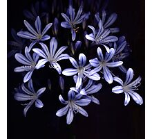 Light Petals Photographic Print