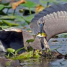 HERON TAKE OUT by Dennis  Small