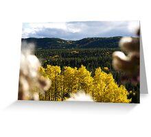 Autumn View in Alberta Greeting Card