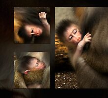 Mandrill Baby Yaro - collage by steppeland
