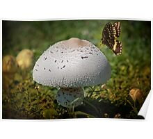 The Mushroom and the Butterfly Poster