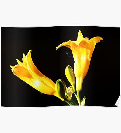Yellow Yellow Poster