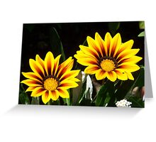Gazanias! Greeting Card