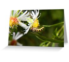 A hungry hoverfly. Greeting Card