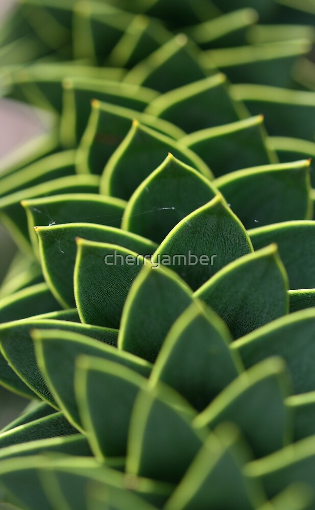 Monkey puzzle, up close but not so personal by cherryamber