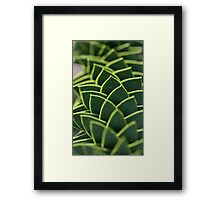 Monkey puzzle, up close but not so personal Framed Print