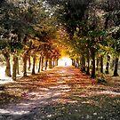 The Path by Danuta Antas