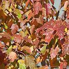 Sunshine on my leaves by Diane Trummer Sullivan