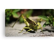 Here's Looking at you Kid Canvas Print