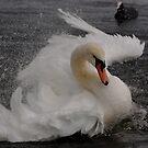 Swan Beauty 2 by Alexa Pereira