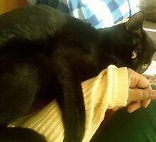 crazy cat by catnip addict manor