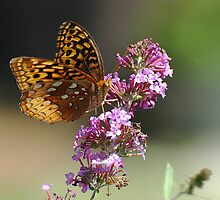 Flutter Power by Dennis Rubin IPA
