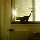 twinkling by catnip addict manor