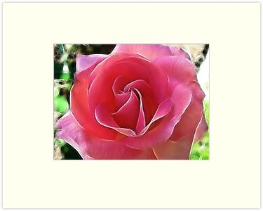 The Breast Cancer Rose by Brenda Boisvert