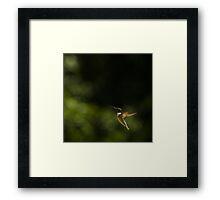 Hummer Posing - 2 Framed Print